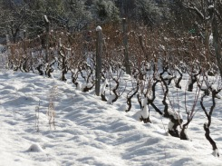 The vineyard at Morlanche