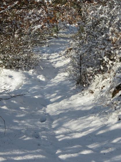 Snowy walk in the wood