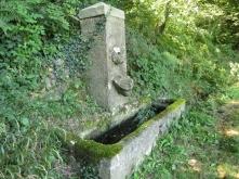 The dog fountain