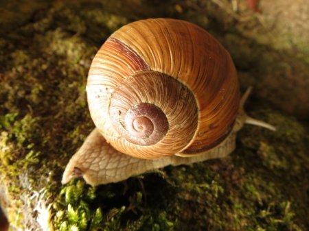 snail 1 (800x600)