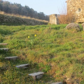 steps and yellow flowers
