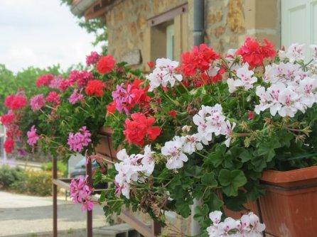 village flowers