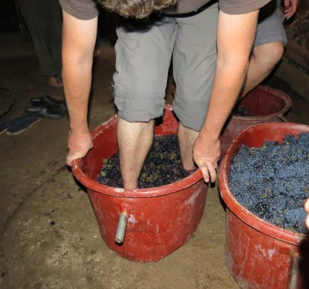 Treading the grapes